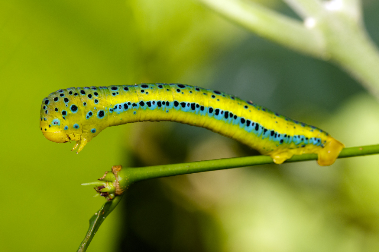 Show-Stopping Caterpillars: Ranked from Cute to Creepy